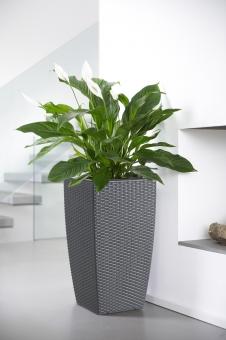 emsa casa mesh blumenk bel granit 66cm. Black Bedroom Furniture Sets. Home Design Ideas