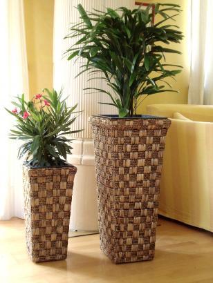 Wasserhyazinthe Blumentopf > online kaufen